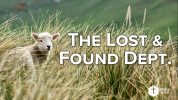 The Lost & Found Dept.